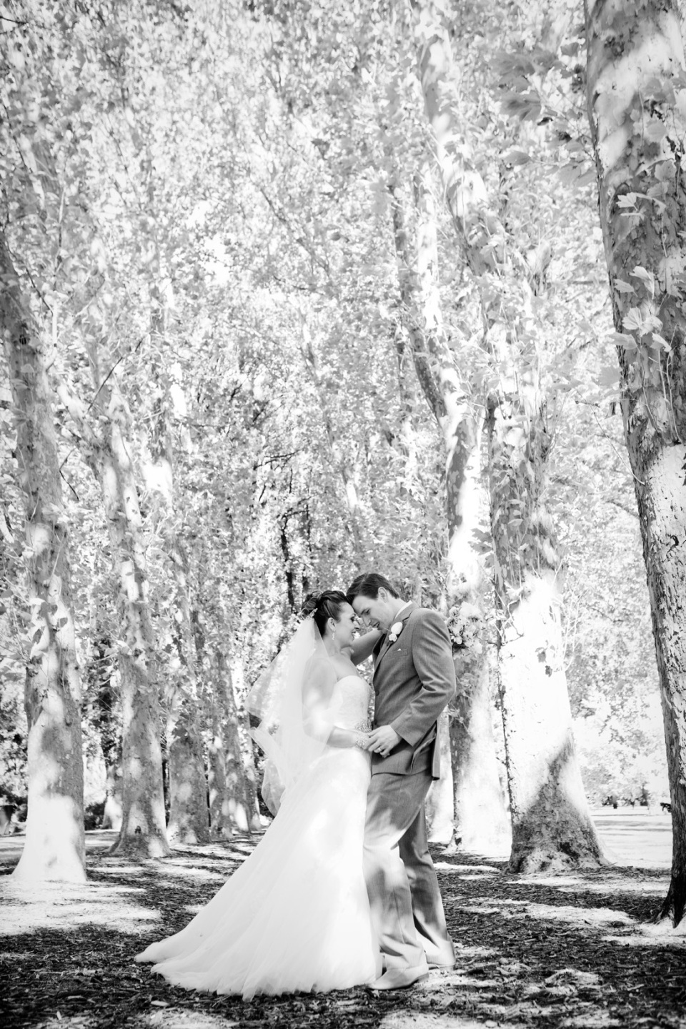 Fitzroy Gardens Wedding Photography, bride and groom with tall trees