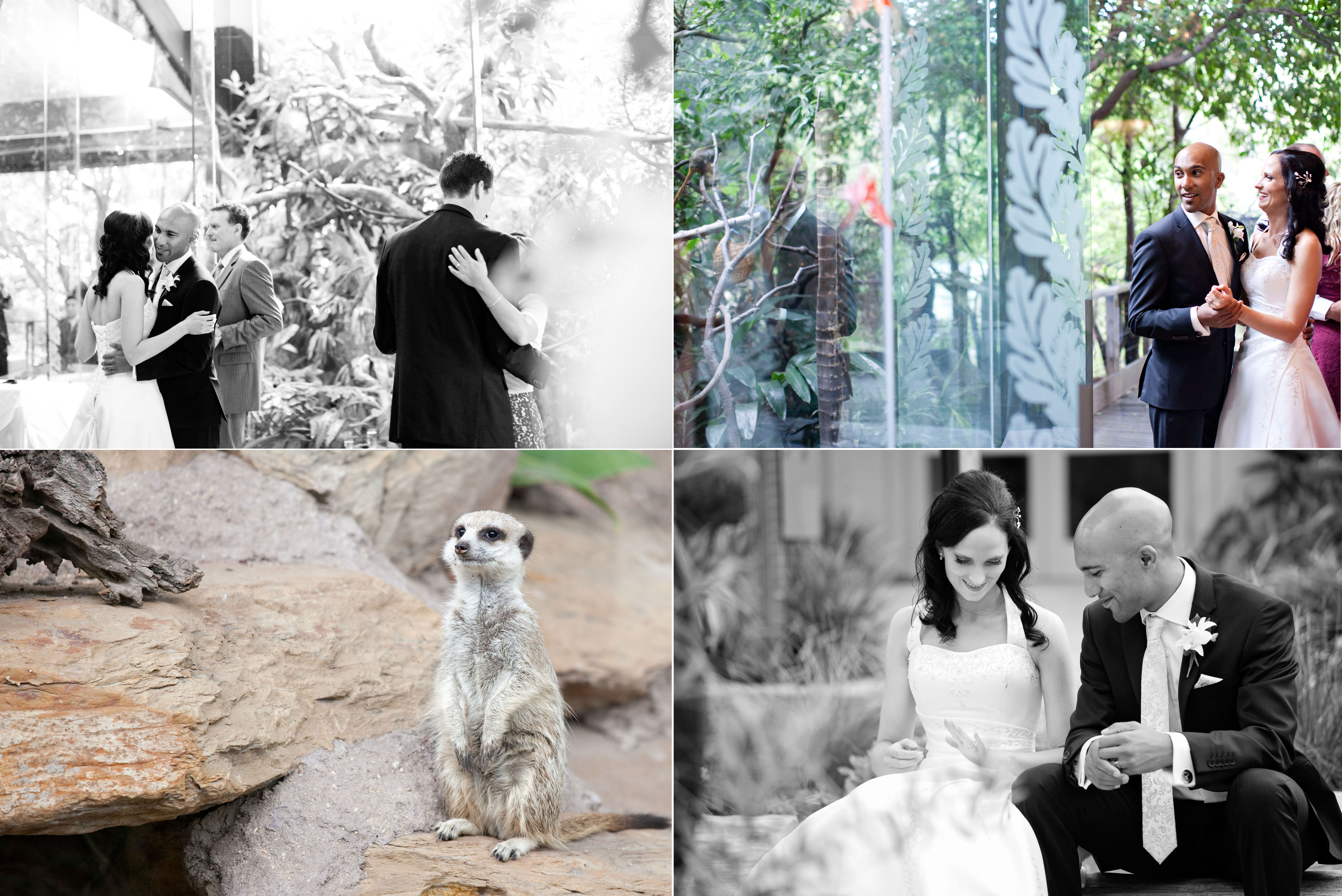Bride and groom melbourne zoo wedding animal encounter
