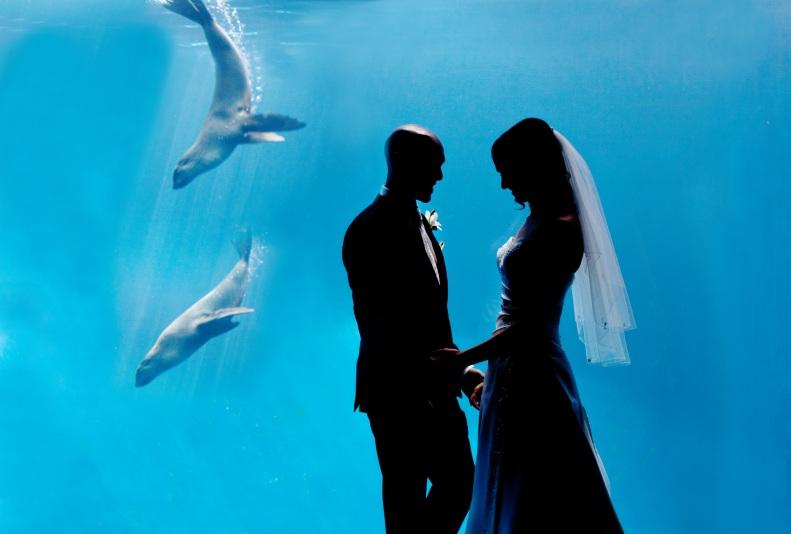 bride and groom wedding photos at melbourne zoo aquarium
