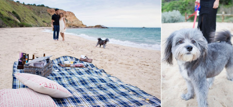 Engagement photos with dog on the beach in Melbourne