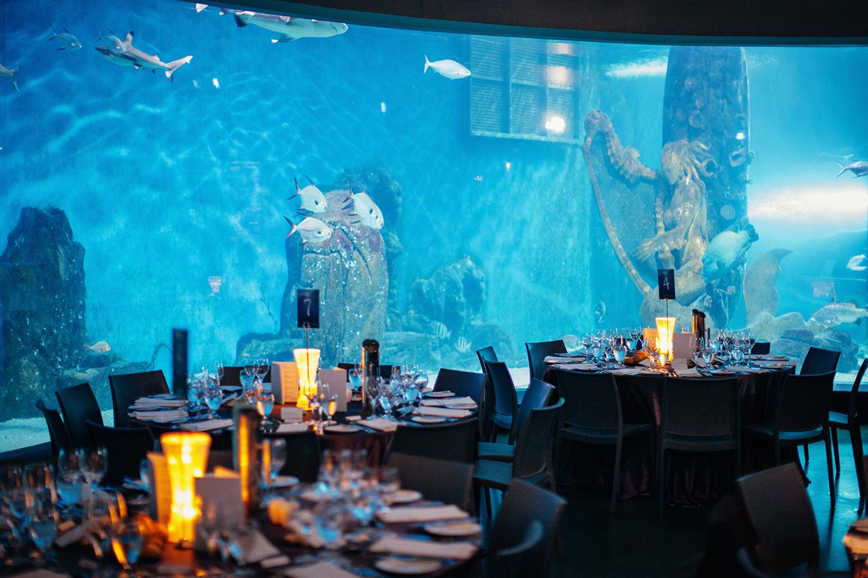 Melbourne Aquarium Wedding Unique Wedding Venue