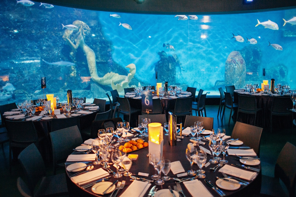 Melbourne aquarium wedding