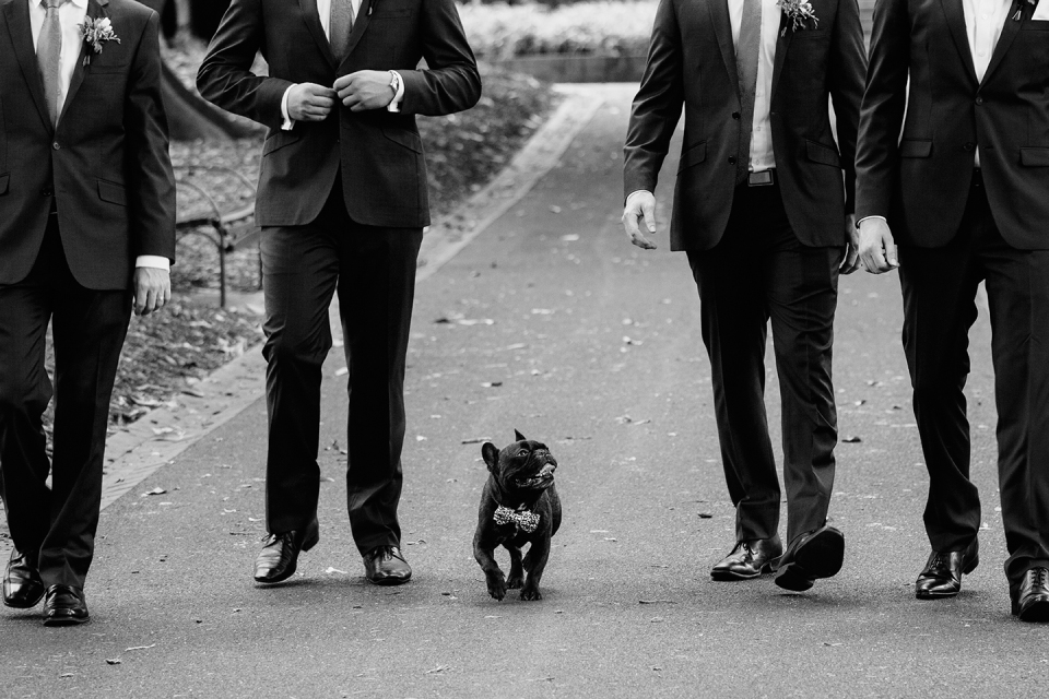 photos of Dog at Melbourne wedding